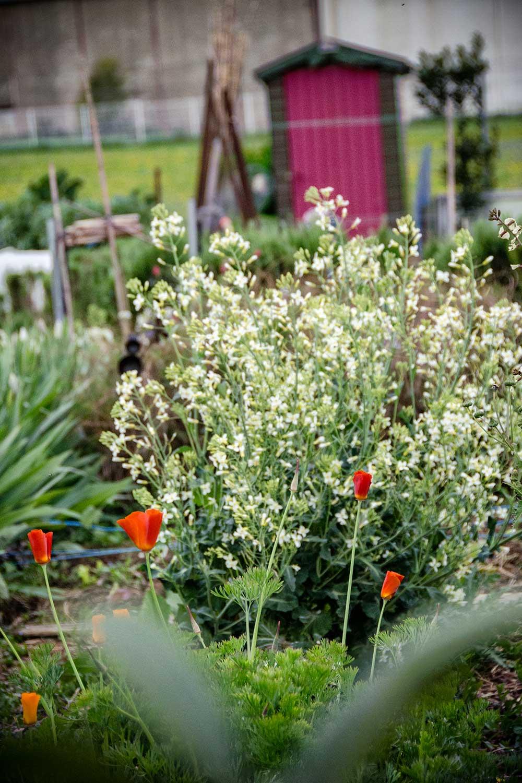 atelier botanique marjolaine jardin la table rallonge. Black Bedroom Furniture Sets. Home Design Ideas